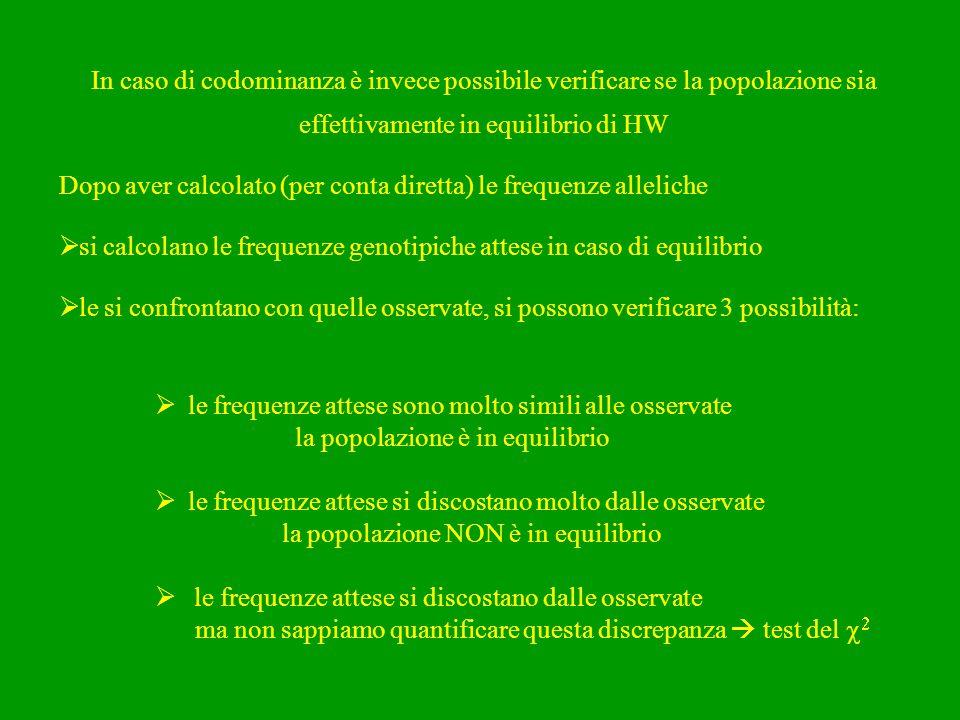 In caso di codominanza è invece possibile verificare se la popolazione sia effettivamente in equilibrio di HW Dopo aver calcolato (per conta diretta)