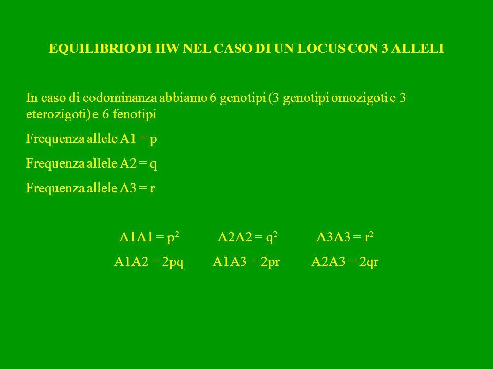 EQUILIBRIO DI HW NEL CASO DI UN LOCUS CON 3 ALLELI In caso di codominanza abbiamo 6 genotipi (3 genotipi omozigoti e 3 eterozigoti) e 6 fenotipi Frequ