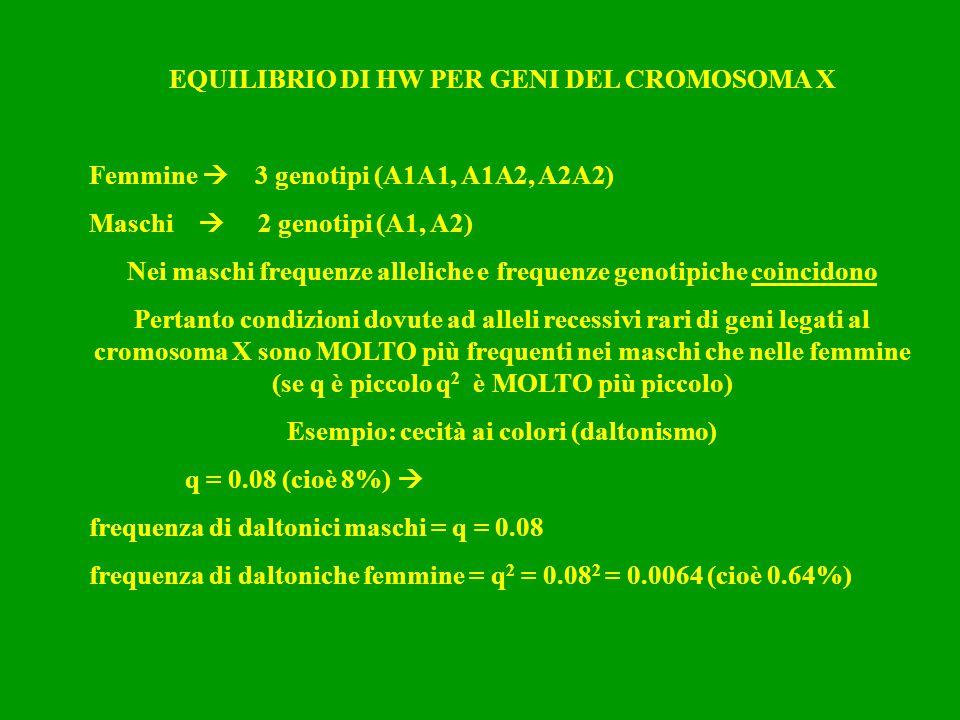 EQUILIBRIO DI HW PER GENI DEL CROMOSOMA X Femmine  3 genotipi (A1A1, A1A2, A2A2) Maschi  2 genotipi (A1, A2) Nei maschi frequenze alleliche e freque