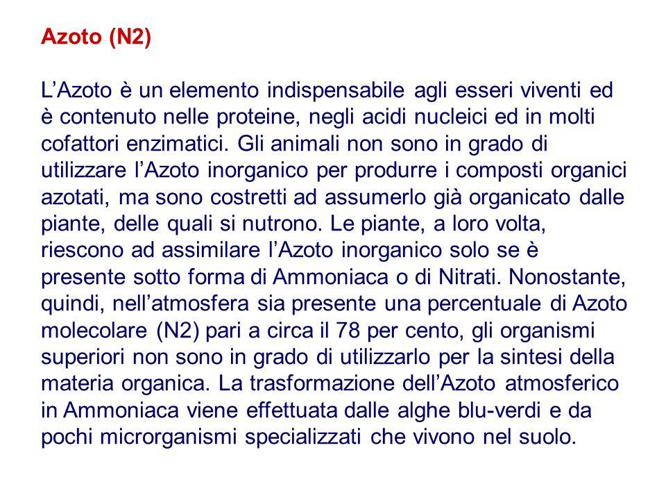 Azoto (N2) L'Azoto è un elemento indispensabile agli esseri viventi ed è contenuto nelle proteine, negli acidi nucleici ed in molti cofattori enzimati