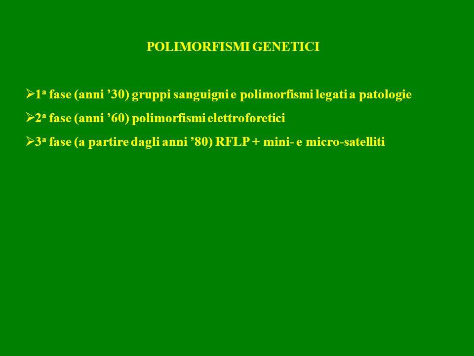 POLIMORFISMI GENETICI  1 a fase (anni '30) gruppi sanguigni e polimorfismi legati a patologie  2 a fase (anni '60) polimorfismi elettroforetici  3