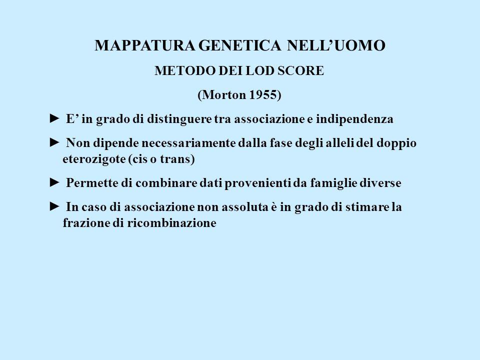 MAPPATURA GENETICA NELL'UOMO METODO DEI LOD SCORE (Morton 1955) ► E' in grado di distinguere tra associazione e indipendenza ► Non dipende necessariam