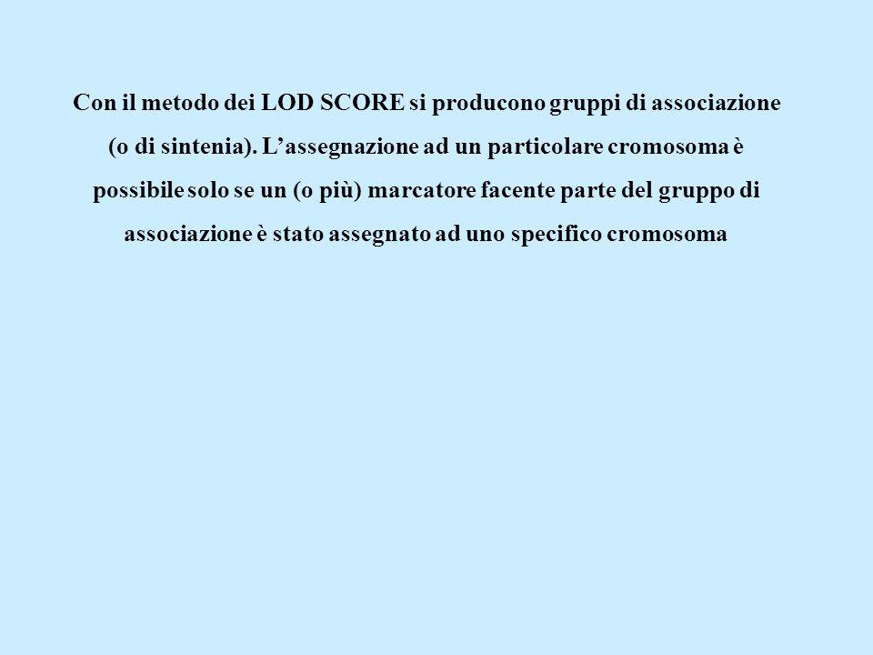 Con il metodo dei LOD SCORE si producono gruppi di associazione (o di sintenia). L'assegnazione ad un particolare cromosoma è possibile solo se un (o