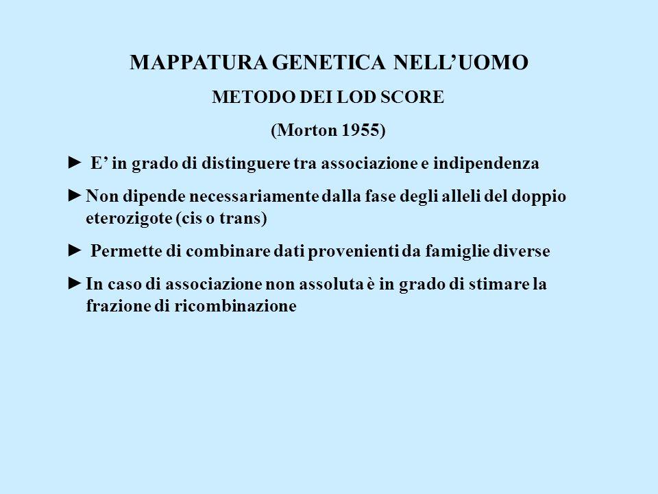 MAPPATURA GENETICA NELL'UOMO METODO DEI LOD SCORE (Morton 1955) ► E' in grado di distinguere tra associazione e indipendenza ►Non dipende necessariame