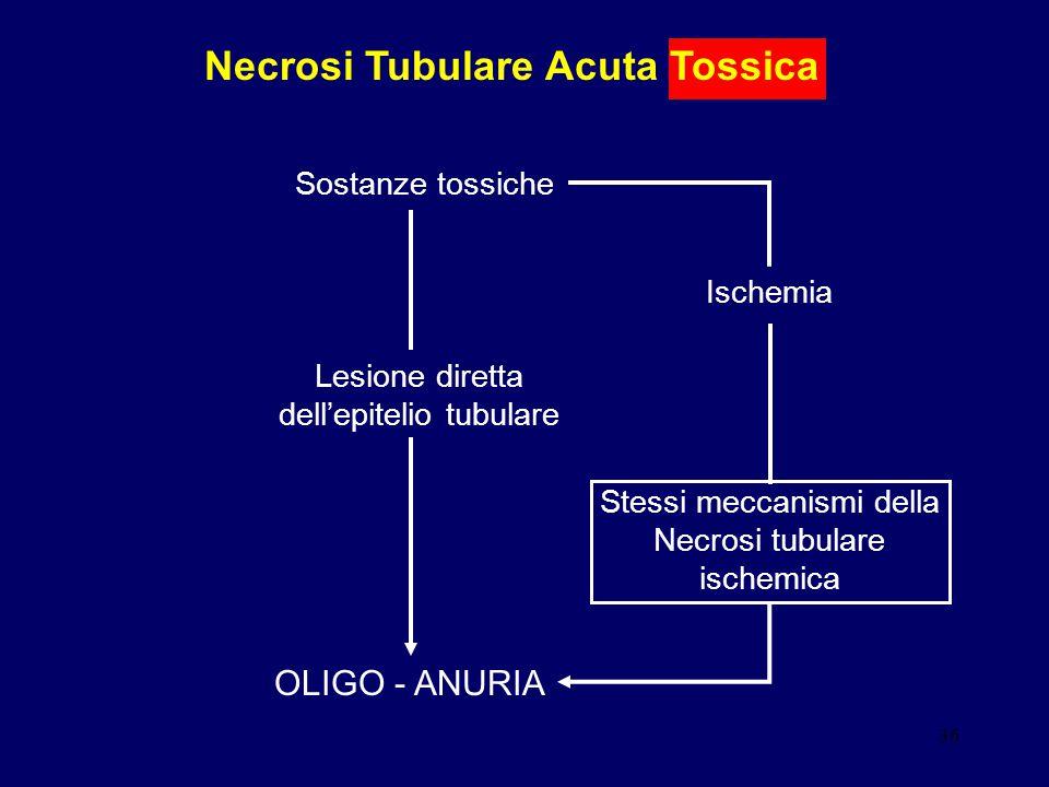 36 Necrosi Tubulare Acuta Tossica Sostanze tossiche Ischemia Lesione diretta dell'epitelio tubulare OLIGO - ANURIA Stessi meccanismi della Necrosi tub