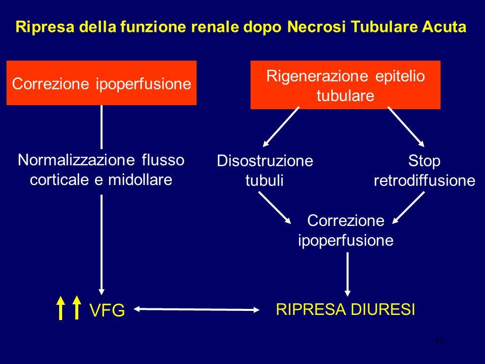 43 Rigenerazione epitelio tubulare Disostruzione tubuli Stop retrodiffusione Correzione ipoperfusione Normalizzazione flusso corticale e midollare VFG