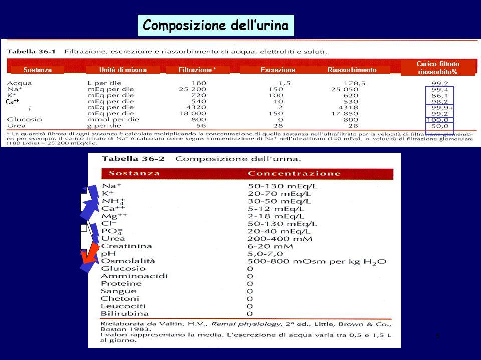 Rene_25 Composizione dell'urina Ca ++ RiassorbimentoEscrezione Carico filtrato riassorbito% Filtrazione *Unità di misuraSostanza