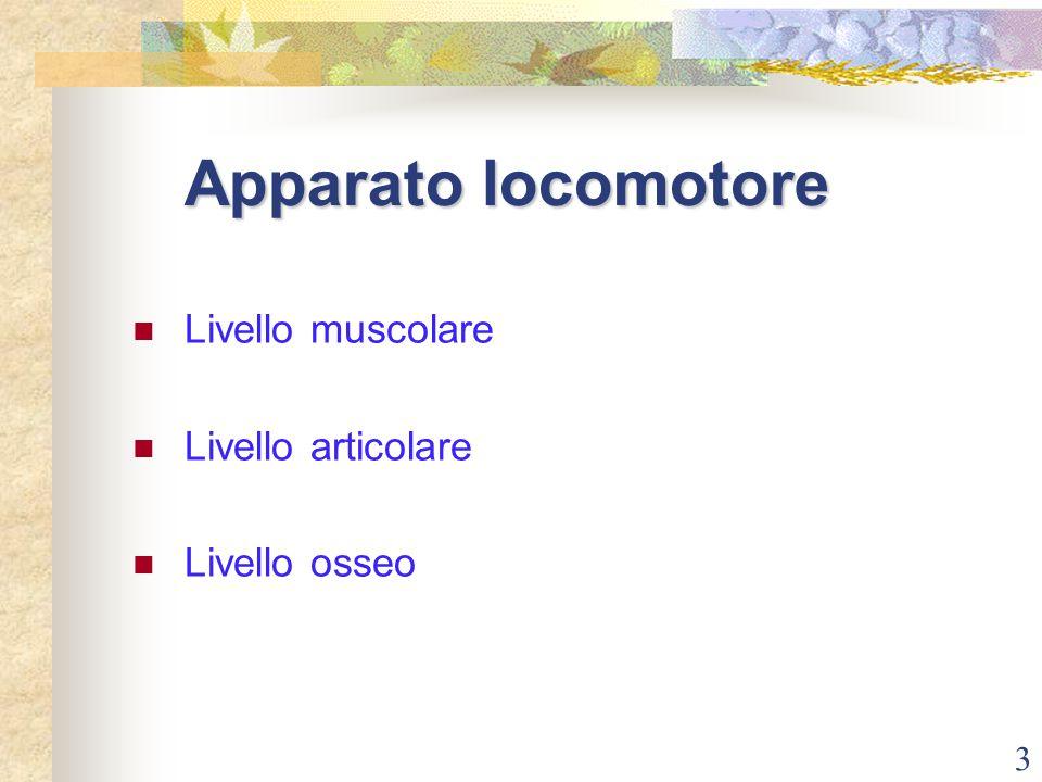 3 Apparato locomotore Livello muscolare Livello articolare Livello osseo