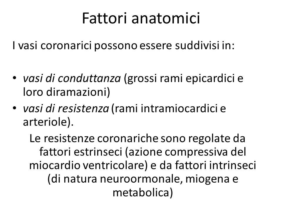 Fattori anatomici I vasi coronarici possono essere suddivisi in: vasi di conduttanza (grossi rami epicardici e loro diramazioni) vasi di resistenza (r