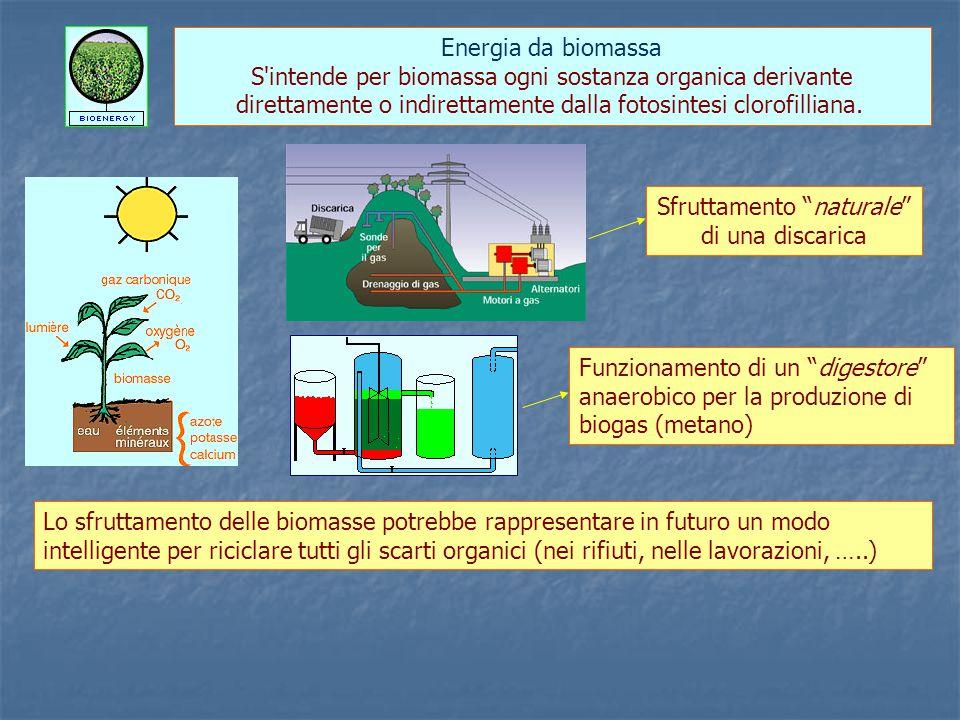 Energia da biomassa S intende per biomassa ogni sostanza organica derivante direttamente o indirettamente dalla fotosintesi clorofilliana.