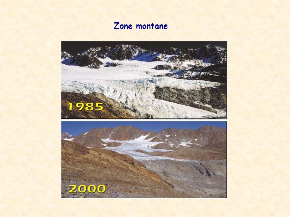 Zone montane