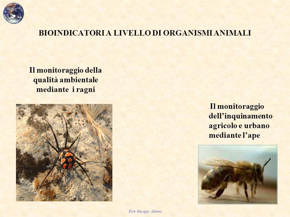 BIOINDICATORI A LIVELLO DI ORGANISMI ANIMALI Il monitoraggio dell'inquinamento agricolo e urbano mediante l'ape Dott. Giuseppe Marino Il monitoraggio