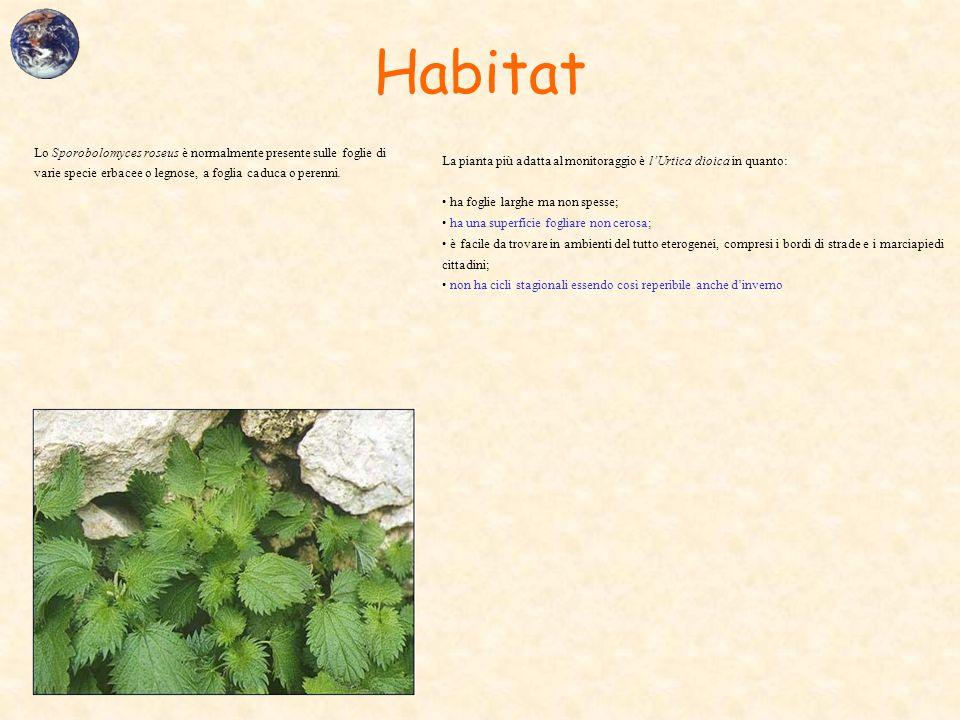 Habitat La pianta più adatta al monitoraggio è l'Urtica dioica in quanto: ha foglie larghe ma non spesse; ha una superficie fogliare non cerosa; è fac