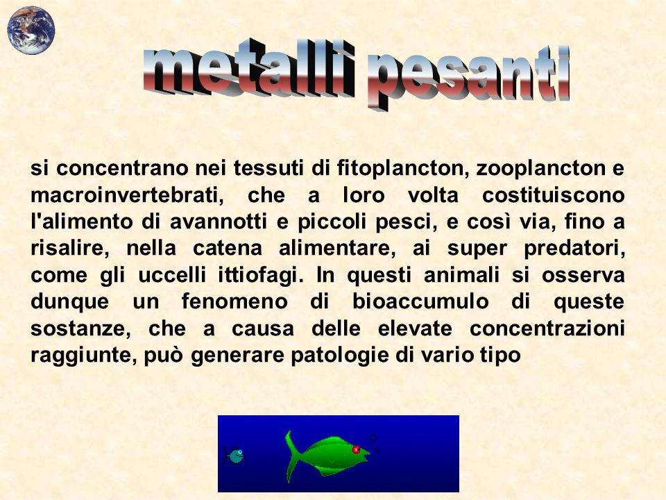 si concentrano nei tessuti di fitoplancton, zooplancton e macroinvertebrati, che a loro volta costituiscono l'alimento di avannotti e piccoli pesci, e