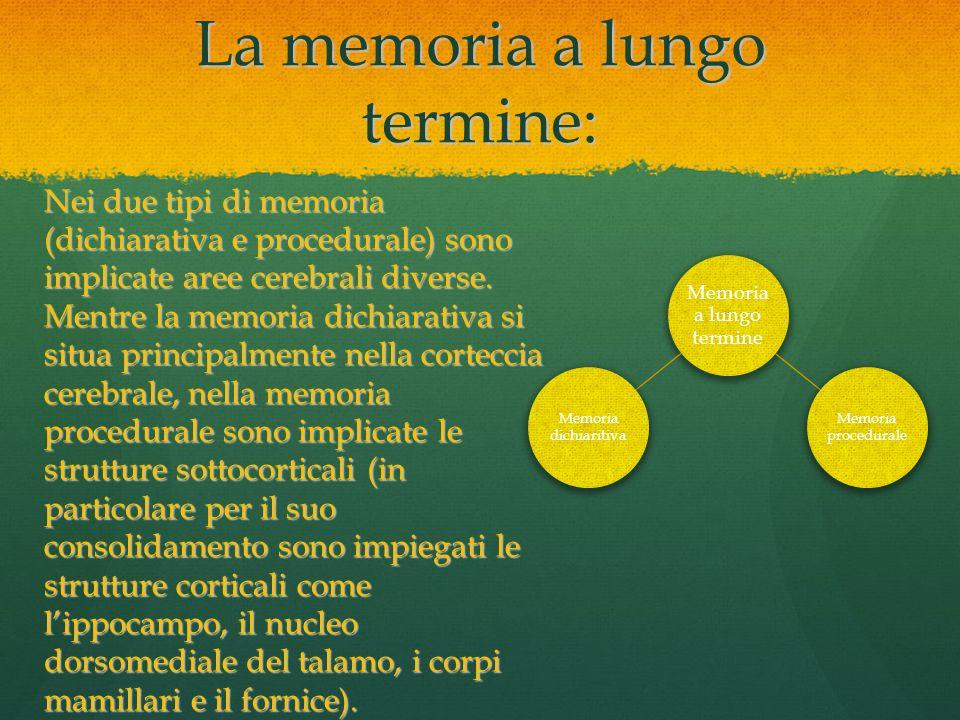 La memoria a lungo termine: Memoria a lungo termine Memoria dichiaritiva Memoria procedurale Nei due tipi di memoria (dichiarativa e procedurale) sono