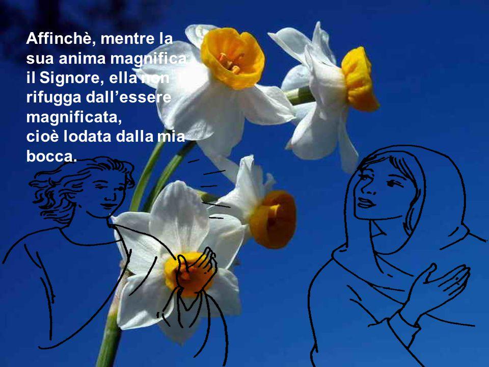 Mi volgo alla cella degli aromi, allo scrigno della sapienza, a Maria, Madre della misericordia,