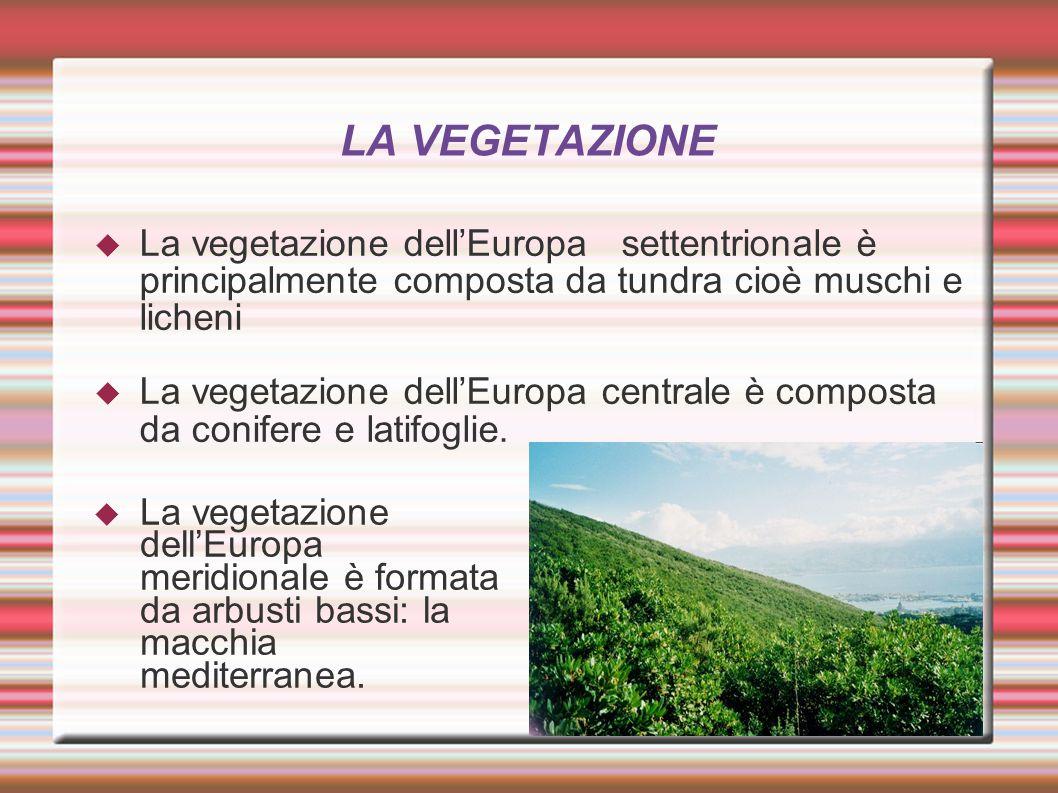 LA VEGETAZIONE  La vegetazione dell'Europa settentrionale è principalmente composta da tundra cioè muschi e licheni  La vegetazione dell'Europa cent