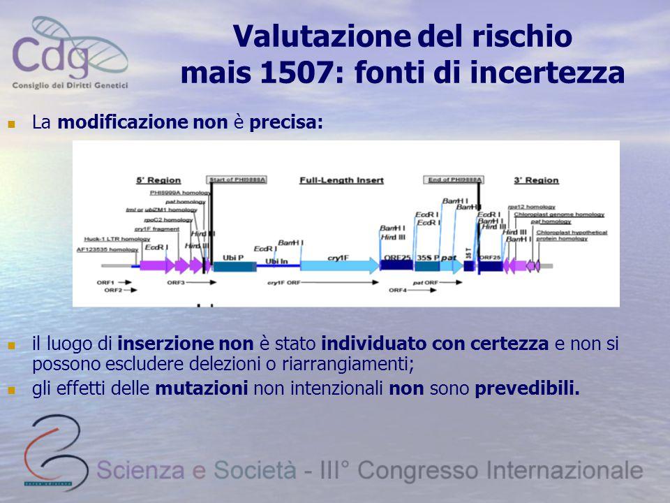 Valutazione del rischio mais 1507: fonti di incertezza La modificazione non è precisa: il luogo di inserzione non è stato individuato con certezza e non si possono escludere delezioni o riarrangiamenti; gli effetti delle mutazioni non intenzionali non sono prevedibili.