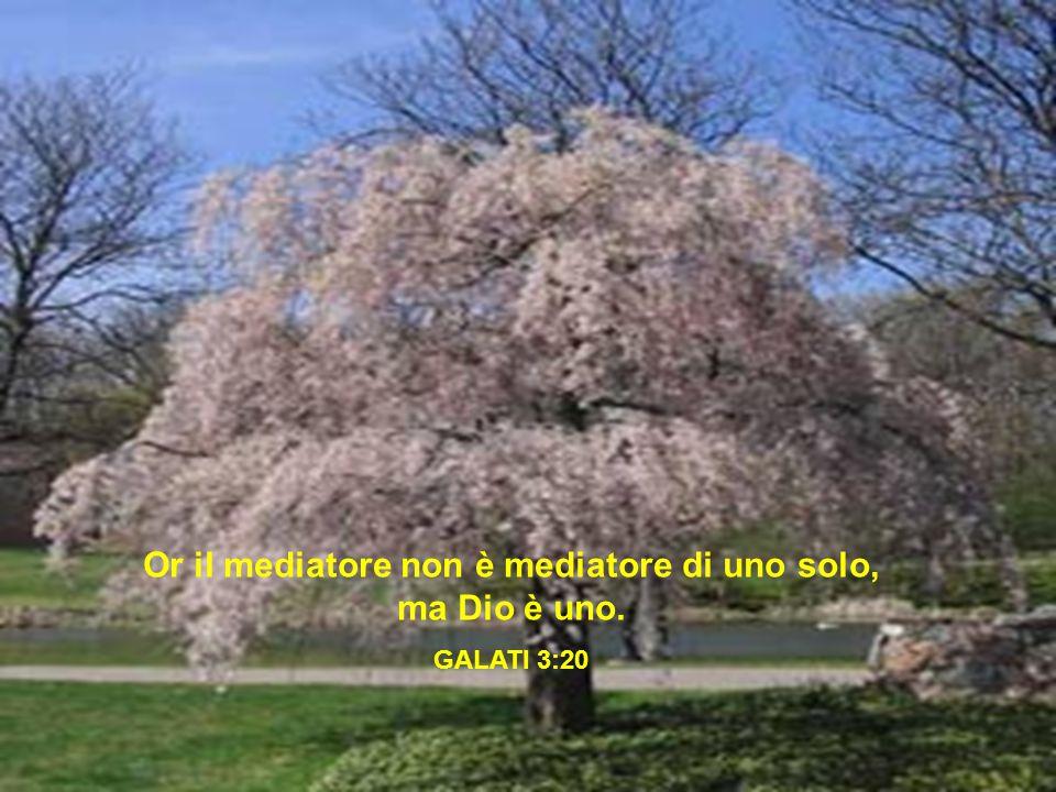 Or il mediatore non è mediatore di uno solo, ma Dio è uno. GALATI 3:20