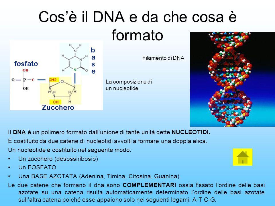 Cos'è il DNA e da che cosa è formato Il DNA è un polimero formato dall'unione di tante unità dette NUCLEOTIDI. È costituito da due catene di nucleotid