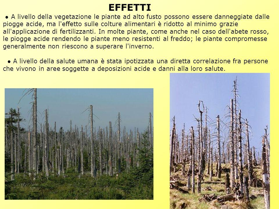 EFFETTI ● A livello della vegetazione le piante ad alto fusto possono essere danneggiate dalle piogge acide, ma l effetto sulle colture alimentari è ridotto al minimo grazie all applicazione di fertilizzanti.