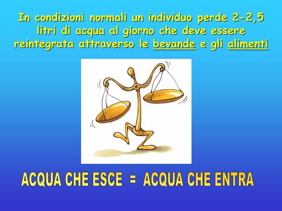 In condizioni normali un individuo perde 2-2,5 litri di acqua al giorno che deve essere reintegrata attraverso le bevande e gli alimenti