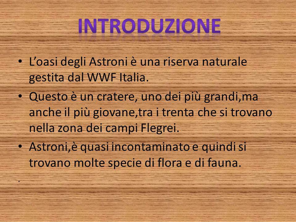 L'oasi degli Astroni è una riserva naturale gestita dal WWF Italia. Questo è un cratere, uno dei più grandi,ma anche il più giovane,tra i trenta che s