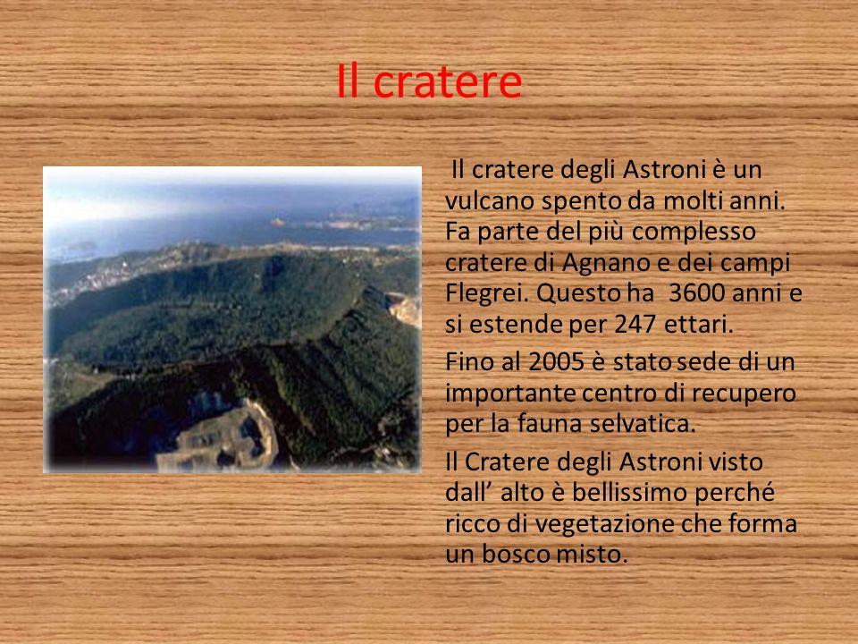 Il cratere Il cratere degli Astroni è un vulcano spento da molti anni. Fa parte del più complesso cratere di Agnano e dei campi Flegrei. Questo ha 360