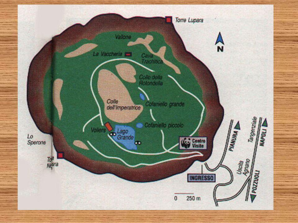 Sulla base delle forme di crescita i licheni possono essere distinti in: licheni crostosi hanno patine aderenti al substrato continue o fessurate o formate da placchette, scaglie o granuli licheni fogliosi formati da lamine non addossate al substrato ma fissati ad esso solo con alcune parti licheni fruticosi hanno l'aspetto di minuscoli cespuglietti, le cui ramificazioni si chiamano lacinie