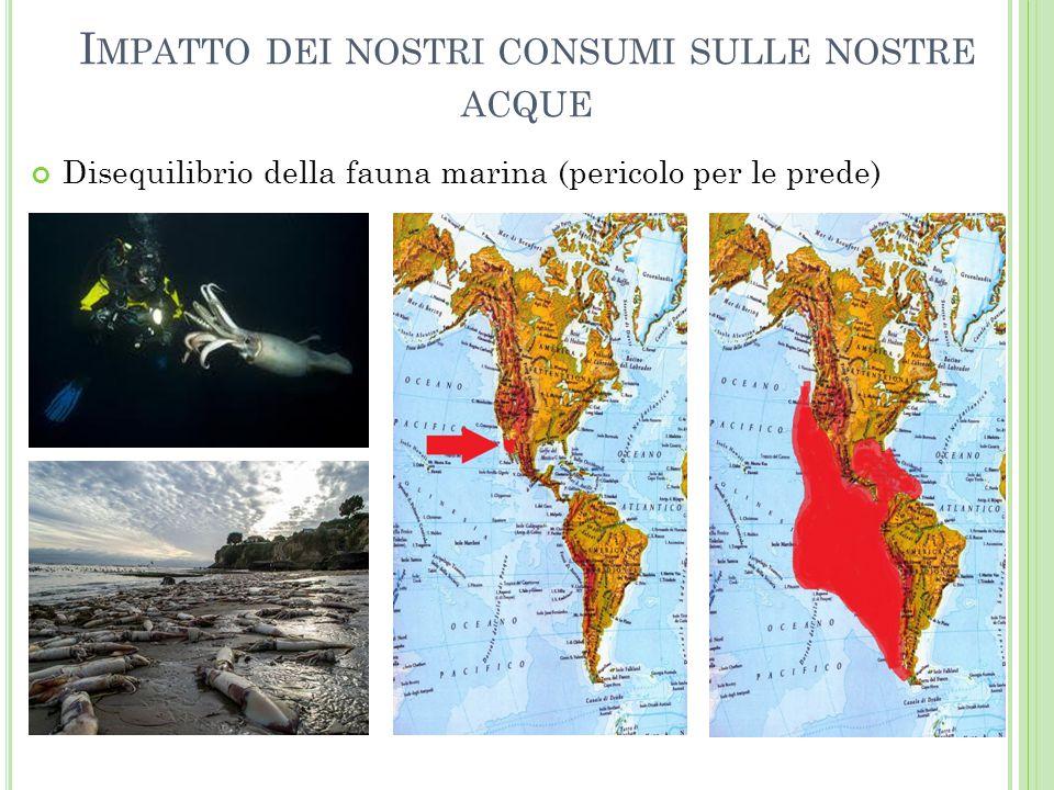 I MPATTO DEI NOSTRI CONSUMI SULLE NOSTRE ACQUE Disequilibrio della fauna marina (pericolo per le prede)