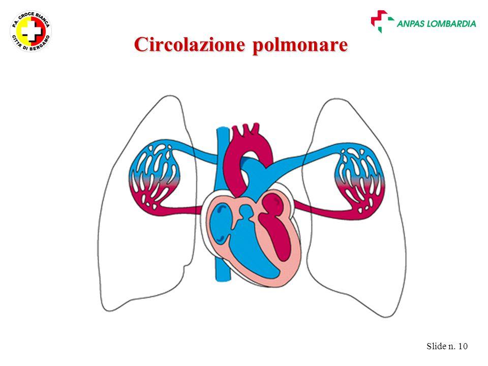 Slide n. 10 Circolazione polmonare