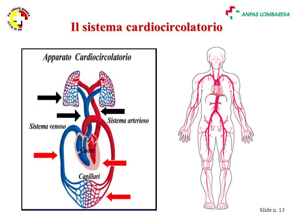 Slide n. 13 Il sistema cardiocircolatorio