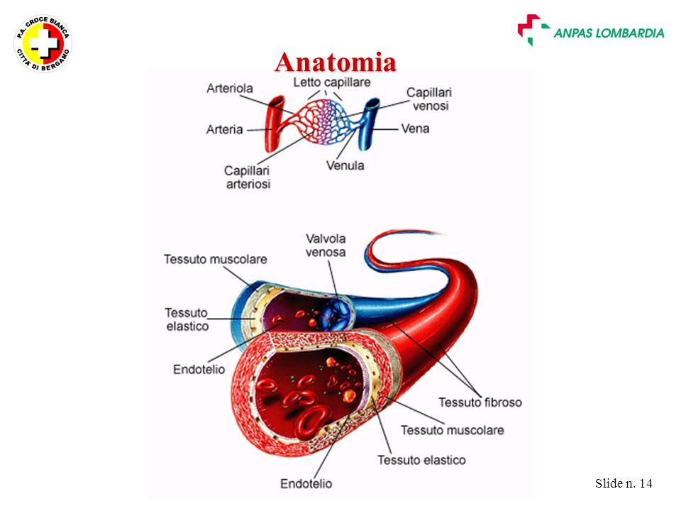 Slide n. 14 Anatomia