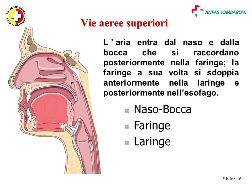 Slide n. 6 L'aria entra dal naso e dalla bocca che si raccordano posteriormente nella faringe; la faringe a sua volta si sdoppia anteriormente nella l