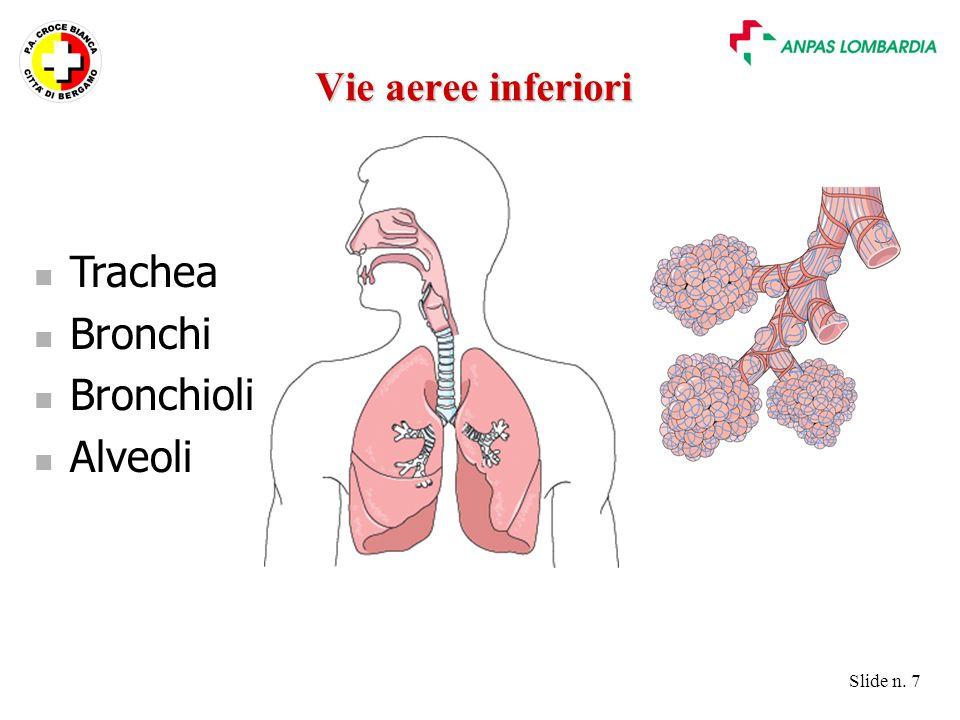 Slide n. 7 Trachea Bronchi Bronchioli Alveoli Vie aeree inferiori