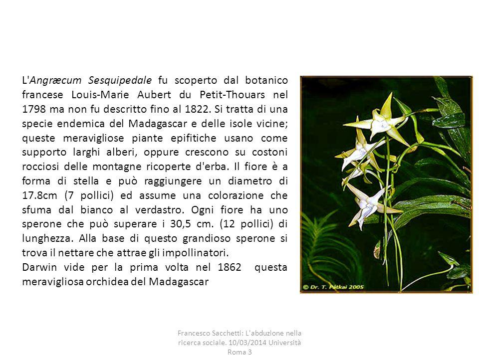 L Angræcum Sesquipedale fu scoperto dal botanico francese Louis-Marie Aubert du Petit-Thouars nel 1798 ma non fu descritto fino al 1822.