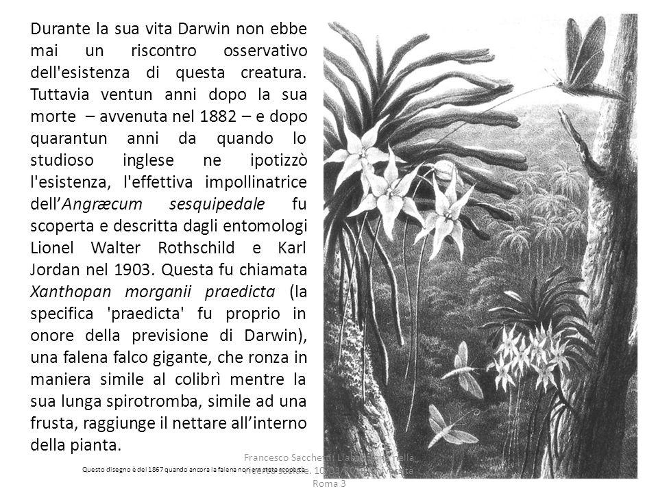 Durante la sua vita Darwin non ebbe mai un riscontro osservativo dell esistenza di questa creatura.