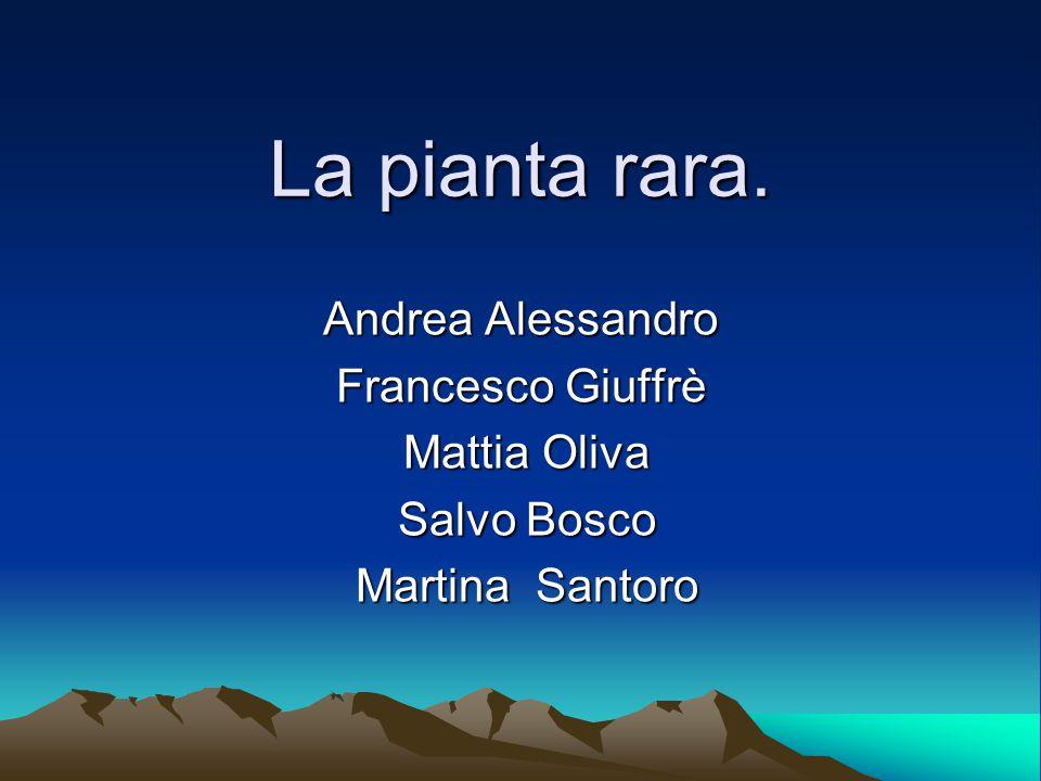 La pianta rara.C'erano una volta cinque amici di nome Andrea, Francesco,Mattia,Salvo,Martina.