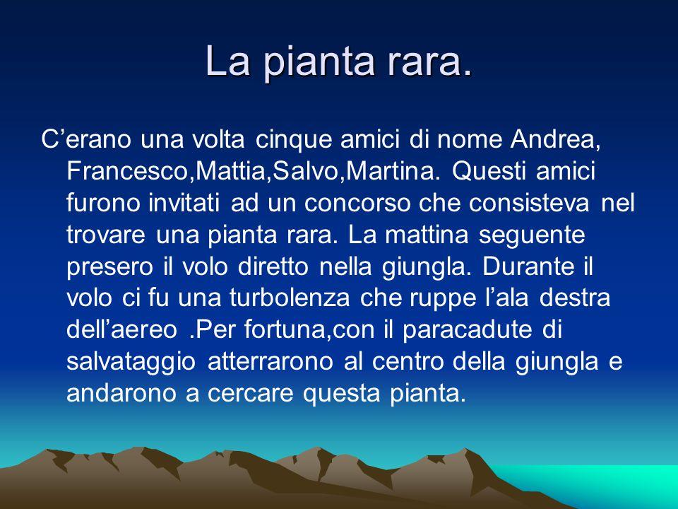 La pianta rara. C'erano una volta cinque amici di nome Andrea, Francesco,Mattia,Salvo,Martina. Questi amici furono invitati ad un concorso che consist