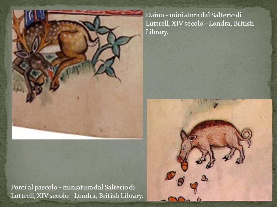 Porci al pascolo - miniatura dal Salterio di Luttrell, XIV secolo - Londra, British Library. Daino - miniatura dal Salterio di Luttrell, XIV secolo -