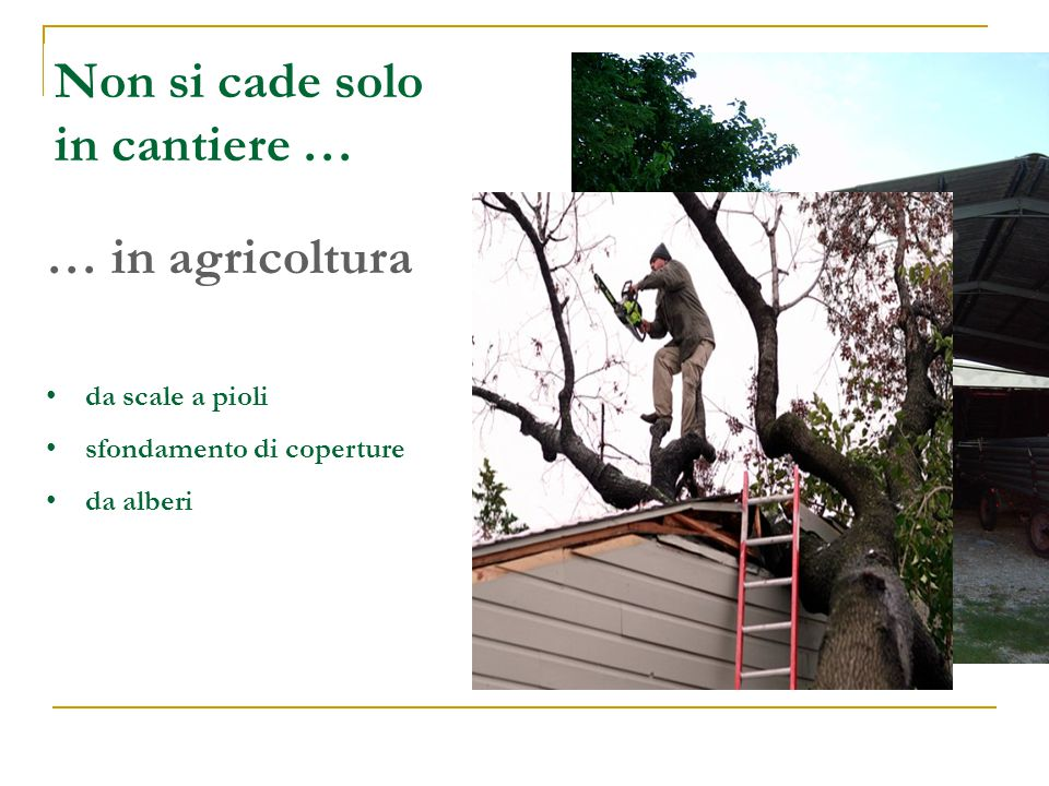 Non si cade solo in cantiere … … in agricoltura da scale a pioli sfondamento di coperture da alberi