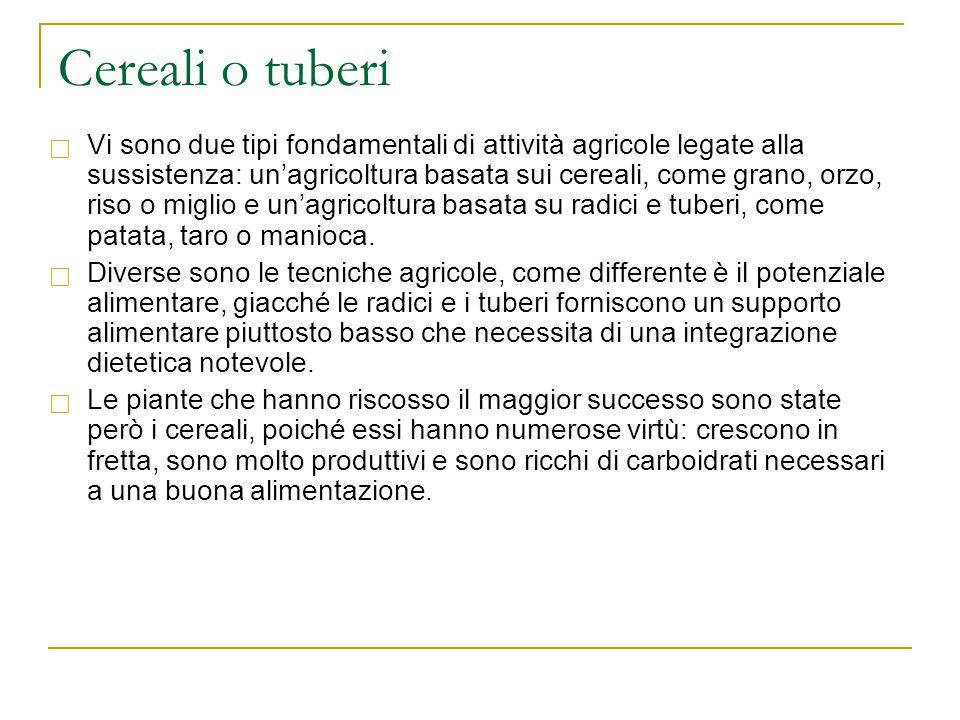 Cereali o tuberi  Vi sono due tipi fondamentali di attività agricole legate alla sussistenza: un'agricoltura basata sui cereali, come grano, orzo, ri