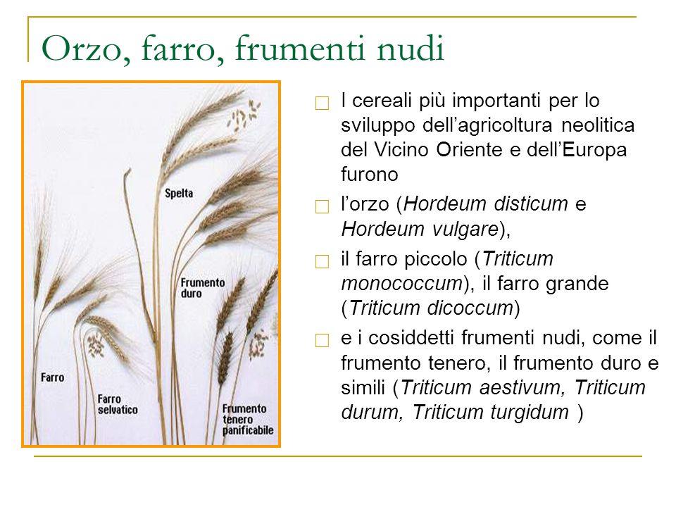 Orzo, farro, frumenti nudi  I cereali più importanti per lo sviluppo dell'agricoltura neolitica del Vicino Oriente e dell'Europa furono  l'orzo (Hor