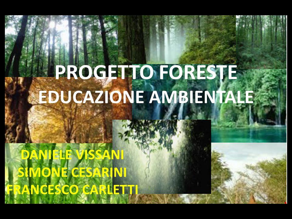 PROGETTO FORESTE EDUCAZIONE AMBIENTALE DANIELE VISSANI SIMONE CESARINI FRANCESCO CARLETTI