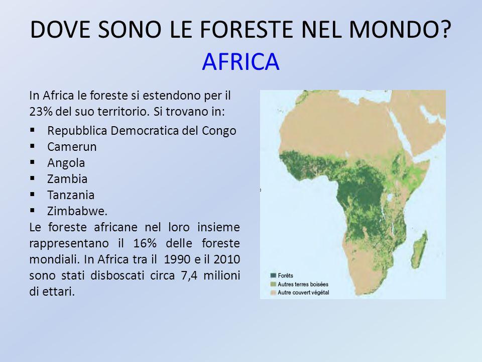 DOVE SONO LE FORESTE NEL MONDO? AFRICA In Africa le foreste si estendono per il 23% del suo territorio. Si trovano in:  Repubblica Democratica del Co