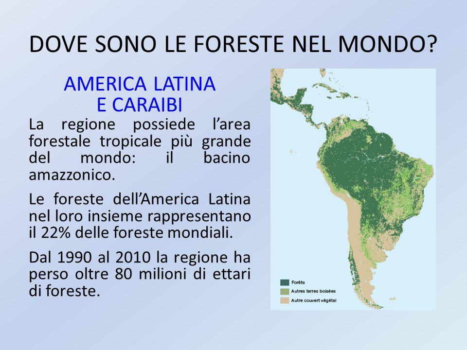 DOVE SONO LE FORESTE NEL MONDO? AMERICA LATINA E CARAIBI La regione possiede l'area forestale tropicale più grande del mondo: il bacino amazzonico. Le