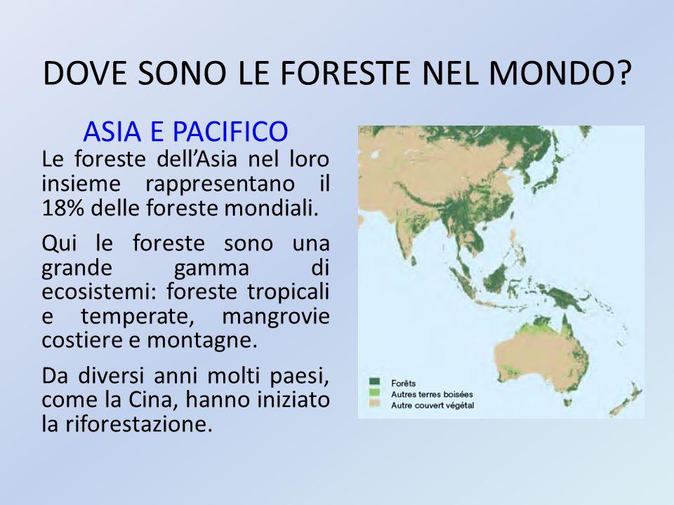 DOVE SONO LE FORESTE NEL MONDO? ASIA E PACIFICO Le foreste dell'Asia nel loro insieme rappresentano il 18% delle foreste mondiali. Qui le foreste sono