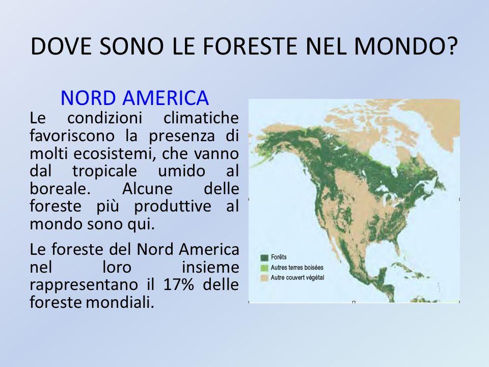 DOVE SONO LE FORESTE NEL MONDO? NORD AMERICA Le condizioni climatiche favoriscono la presenza di molti ecosistemi, che vanno dal tropicale umido al bo