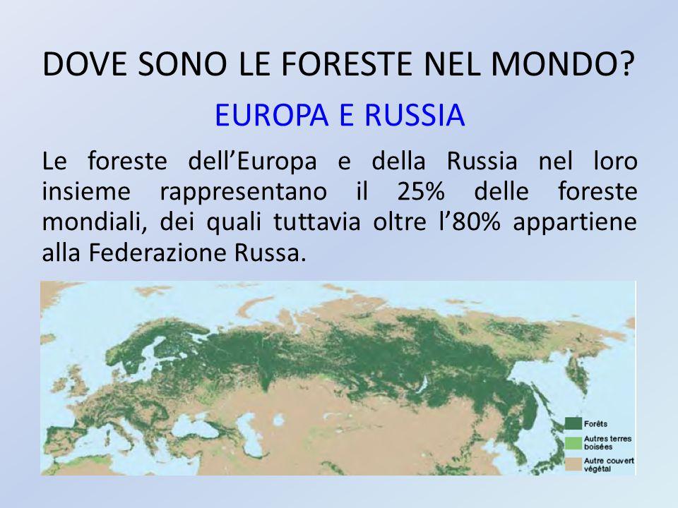 DOVE SONO LE FORESTE NEL MONDO? EUROPA E RUSSIA Le foreste dell'Europa e della Russia nel loro insieme rappresentano il 25% delle foreste mondiali, de