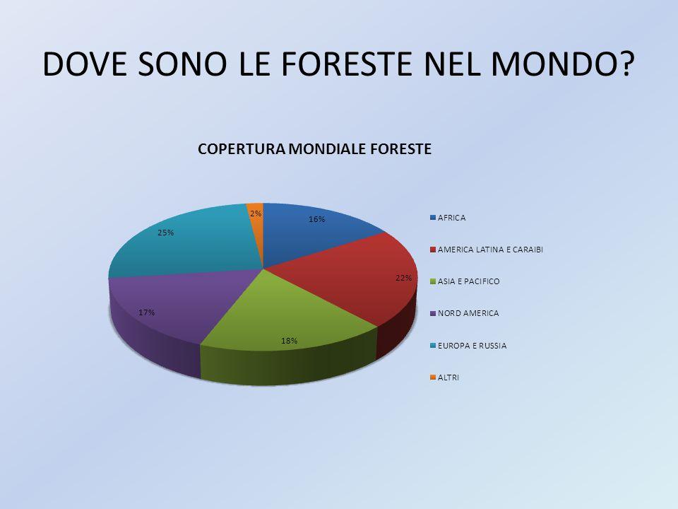 DOVE SONO LE FORESTE NEL MONDO?
